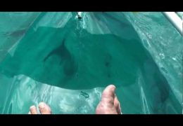 Yup, Even Dolphins Like Clear Kayaks