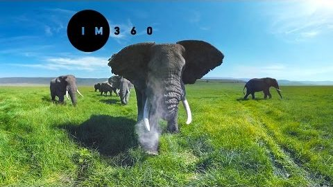 Wild Elephants in 4k