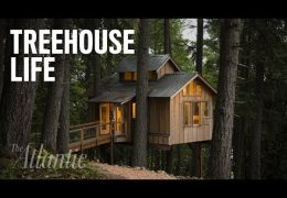 Treehouse Dreams